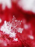 Snow Flakes Of Blood